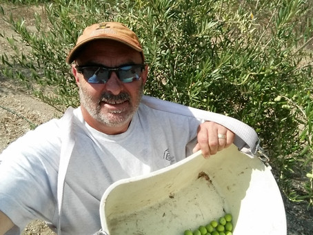 The 2015 Olive Odyssey – Part 1