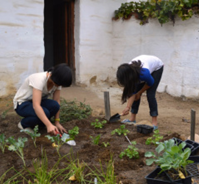 Planting new winter vegetables in the Presidio Northeast Corner gardens. Photo by Michael Imwalle.