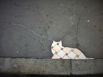 Trajectoire d'une mouche vers l'oreille d'un chat, Lyon, 2017.