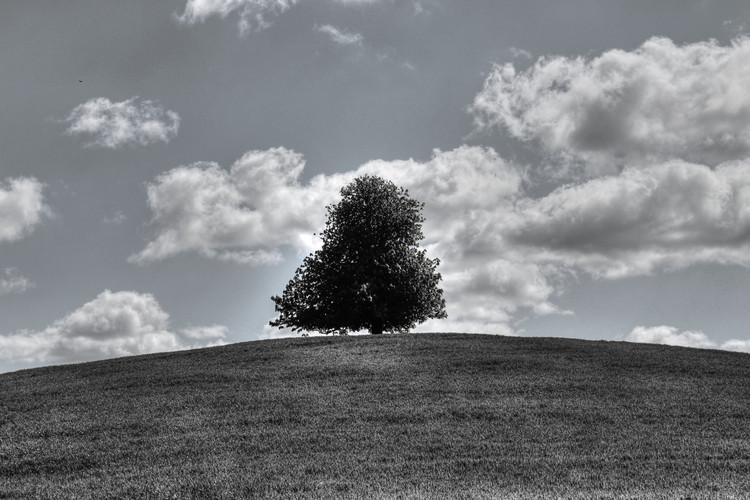 Card Tree.jpg