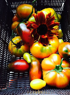 vegsunflower.jpg