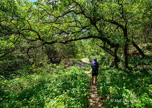 HDH - Lost Maples - Mystic Canyon - Web