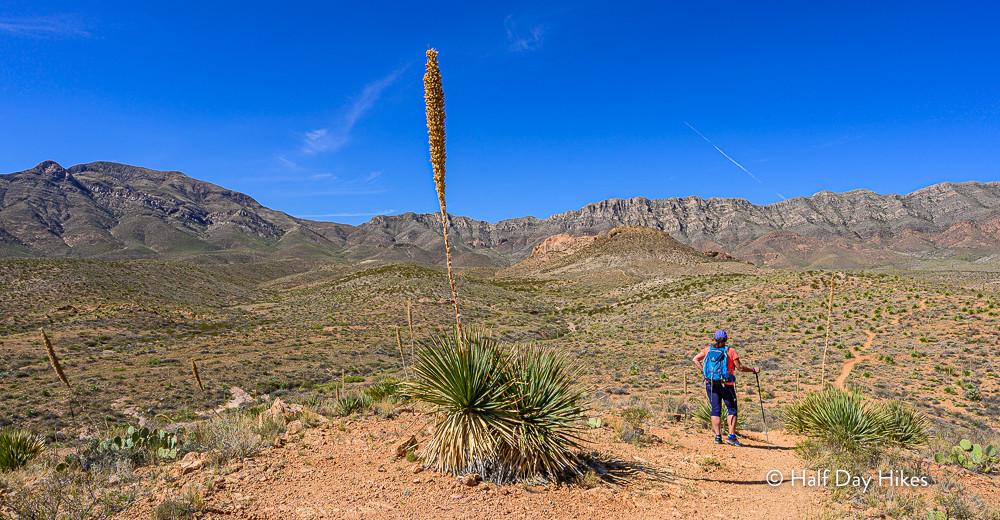 Cardiac Hill Trail