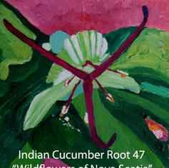 47-Indian-Cucumber-Root index.jpg