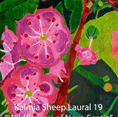 19 Kalmia Sheeps Laural index.jpg