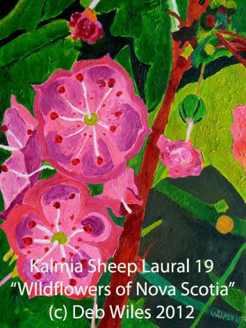 19 Kalmia Sheeps Laural index.jpg