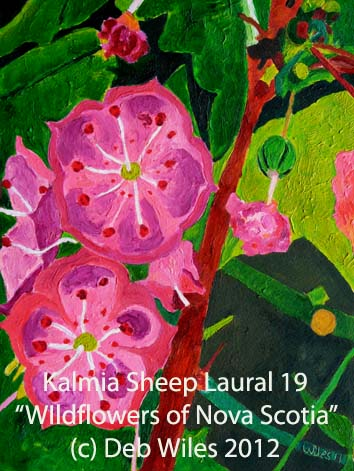 Kalmia Sheeps Laural