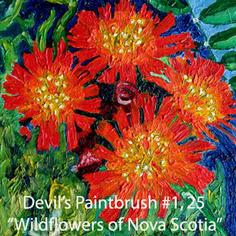 25 Devils Paintbrush index.jpg