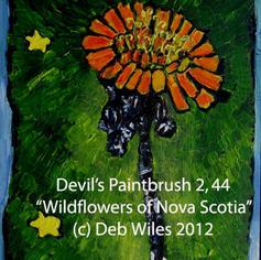 44 Devils Paintbrush index.jpg