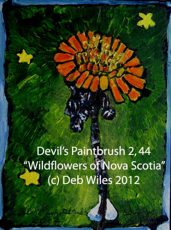 44 Devils Paintbrush index.jpg