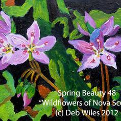 48-Spring-Beauty index.jpg