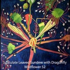 53 Spatulate Leaved Sundew index.jpg