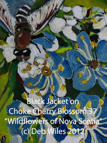 37-Blaackjacket-Chokecherry index.jpg