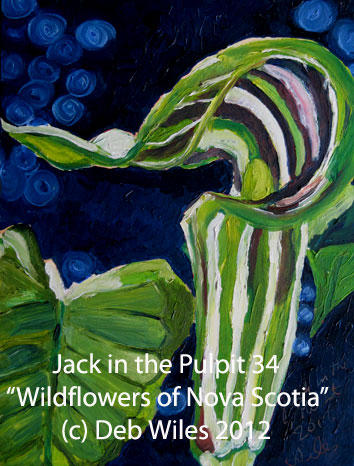 34-Jack-in-the-Pulpit.jpg