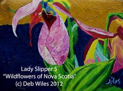 Lady Slipper #5