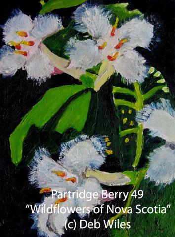 49-Partridge-Berry index.jpg