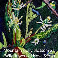 21 Mountain Holly Blossom index.jpg