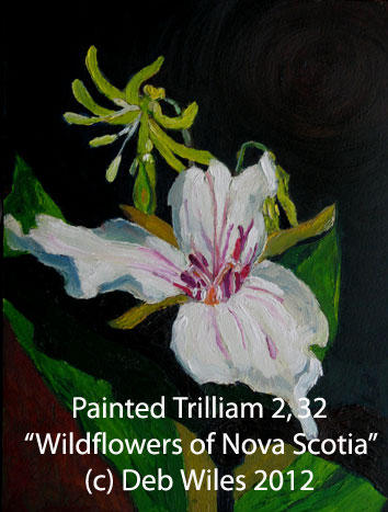 32-Painted-Trilliam-.jpg