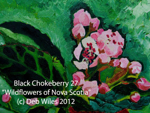 27 Black Chokeberry index.jpg