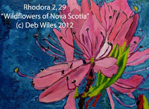 29-Rhodora-2 index.jpg