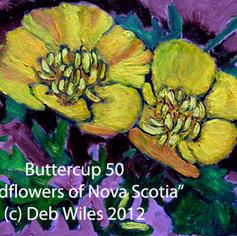 50-Buttercupindex.jpg
