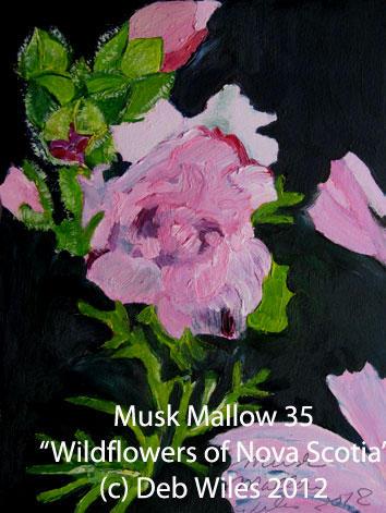 35 Musk-Mallow.jpg