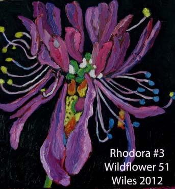 51 Rhodora 3 index.jpg