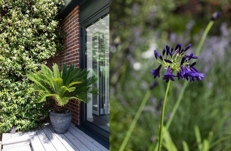Broadstairs plants