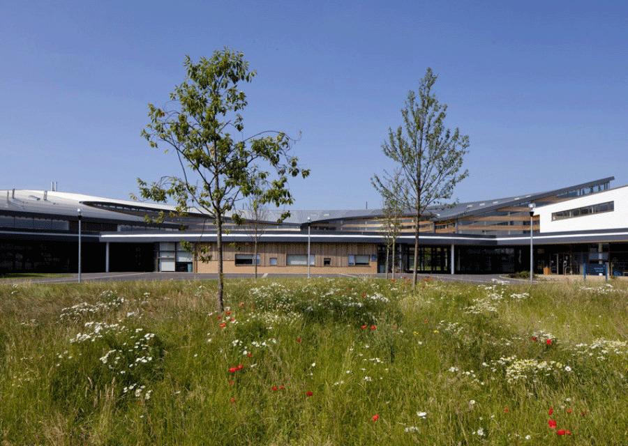 Entrance meadow