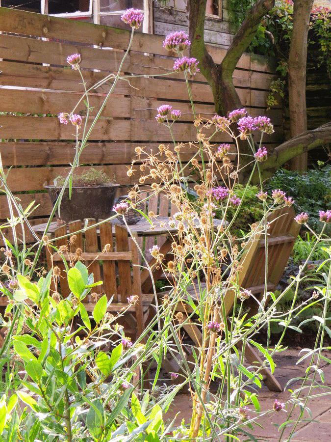 Soft screen planting