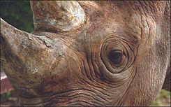 Animal Atlas Episode