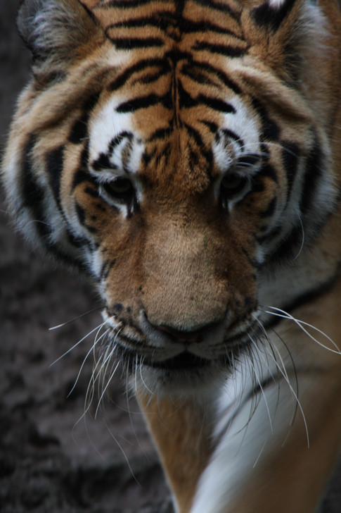 Animal Atlas Photograph