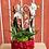 Thumbnail: Phaleno e piante mix in vaso