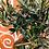 Thumbnail: Ulivo con sottovaso in terracotta