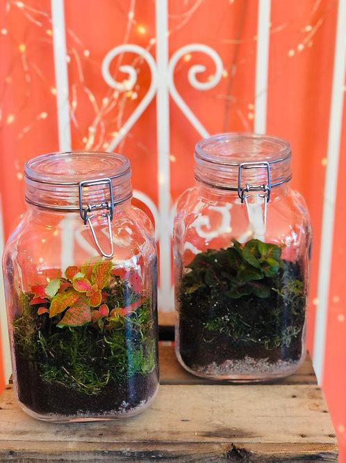 Terrarium in vaso