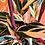 Thumbnail: Calathea Triostar