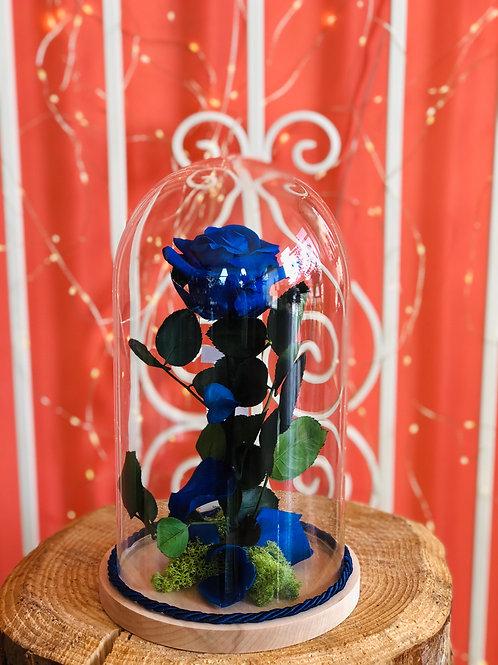 Campana di vetro Luxury - Rosa blu