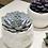 Thumbnail: Echeveria con sottovaso design