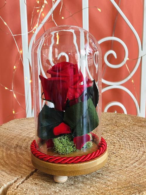 Campana di vetro Luxury - mini
