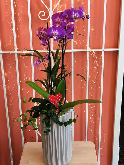 Phaleno e piante mix in vaso