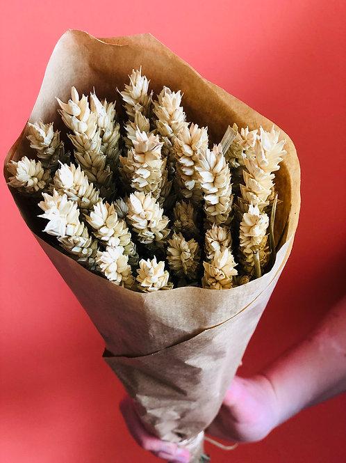 Mazzo di spighe di grano