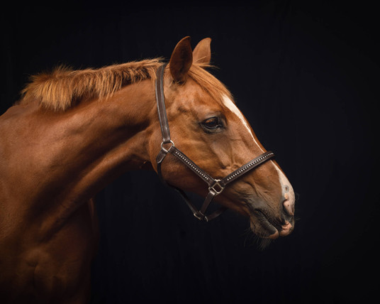 Equine photographer susse and surrey.jpg