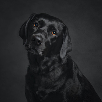 Caninie photographer sussex.jpg