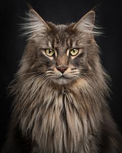 002_sussex_cat_photographer.jpg