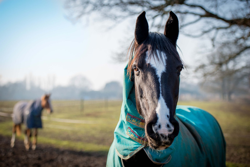 001_sussex_horse_photoshoot.jpg.jpg