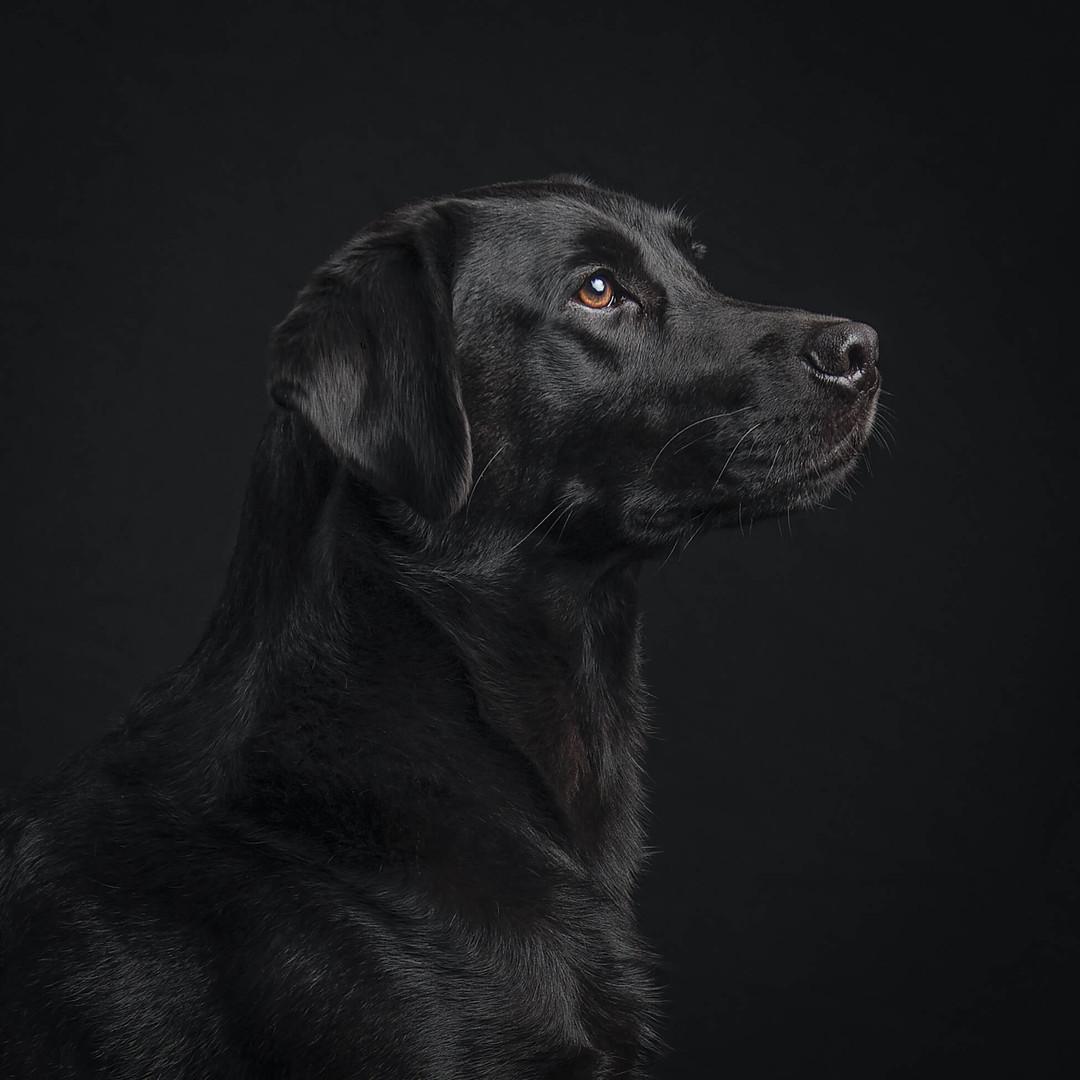 Dog photographer sussex.jpg