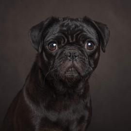 Pet dog photographer sussex.jpg