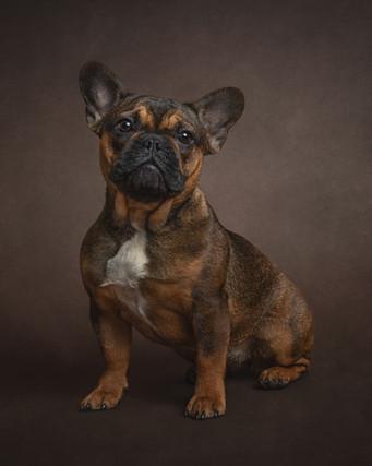 Puppy photographer sussex.jpg