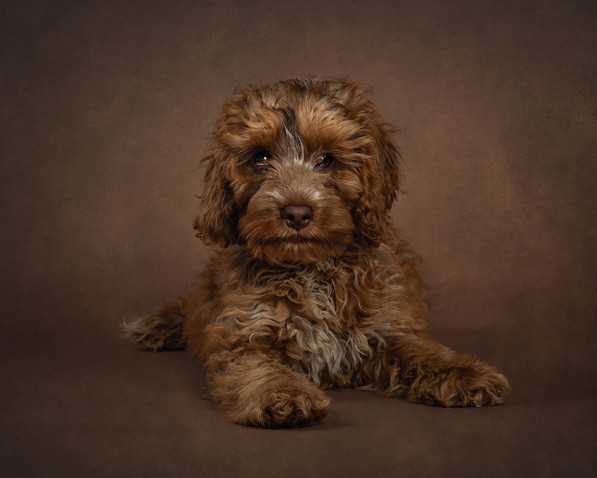 Pet and dog photographer sussex.jpg