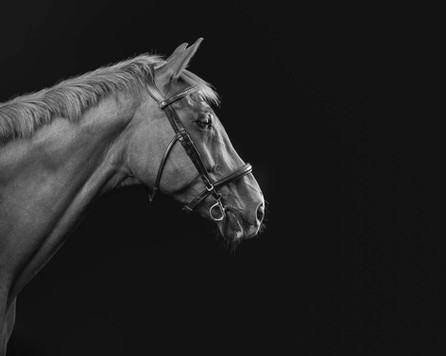 Equine photographer sussex.jpg